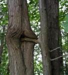 funny-tree-porn_12