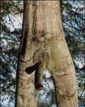 funny-tree-porn_21