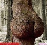 funny-tree-shape