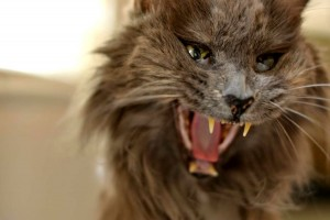 satan_cat_by_lindsaytaylore-d5bobdz