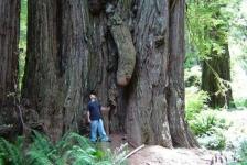 funny-tree-11